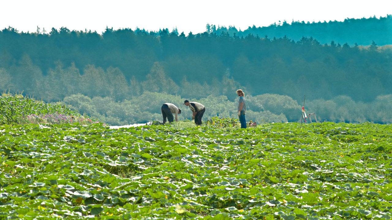https://www.danielarondinelli.it/wp-content/uploads/2021/07/agricoltura_pratiche_commerciali-1280x720.jpg